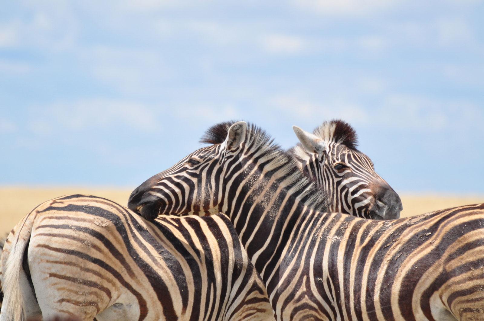 kleidung afrika safari